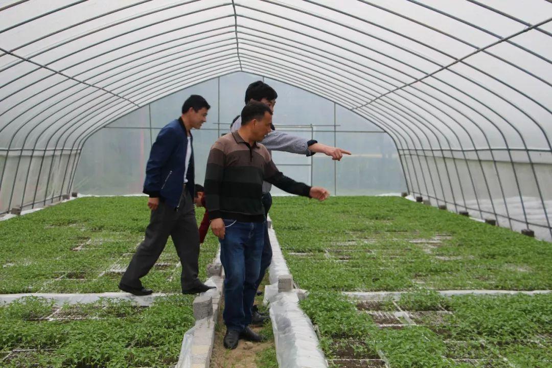 青杠塘:五动打好农业产业结构调整组合拳