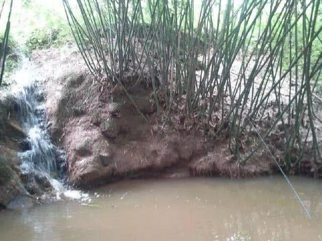 春季小河沟钓鲫鱼⊙小河沟沟里这样的土鲫鱼你钓到过吗,网站推广