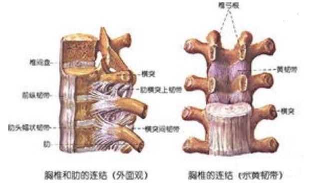胸椎压迫腹部神经的症状