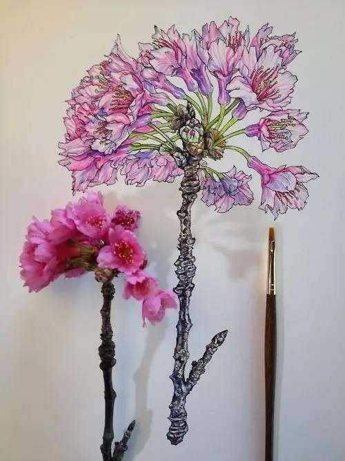 简单易学的针管笔植物手绘,超适合初学者!