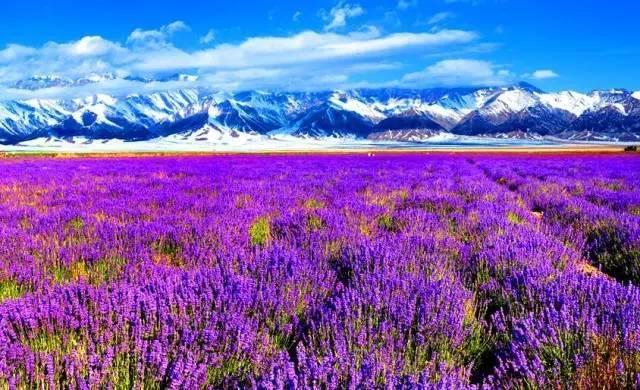 最美的地方�9�+���9�_夏天的新疆,中国最美的地方!