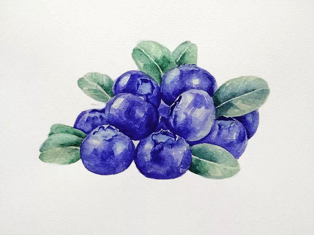 风急雨骤,泰顺阳山生态蓝莓 摘一半掉一半 ,农户很心疼,你能帮助他们吗