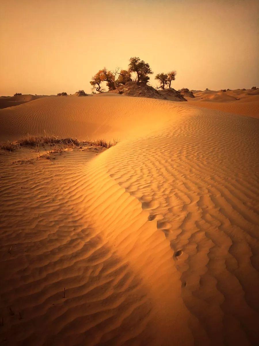 卓凡9815 塔克拉瑪干沙漠 蒼茫天穹下一望無際的黃沙,縹緲間帶給人們圖片