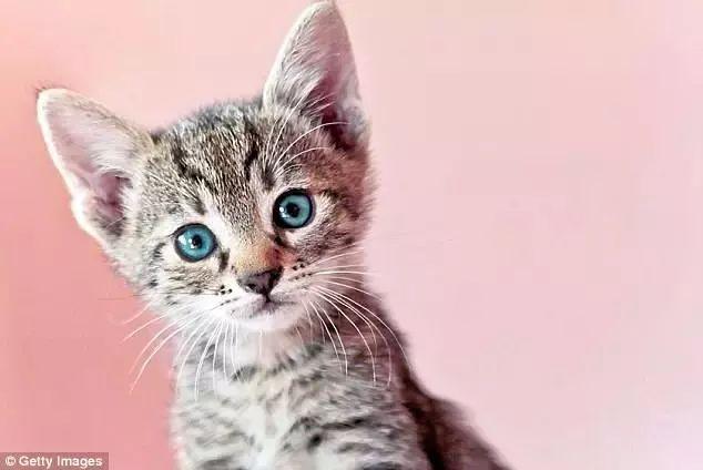 微波炉虐猫事件图片图片
