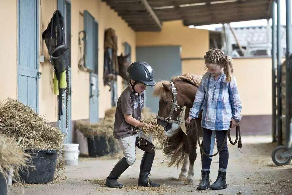 从小培养贵族气质 | 8种适合孩子骑乘的马匹品种