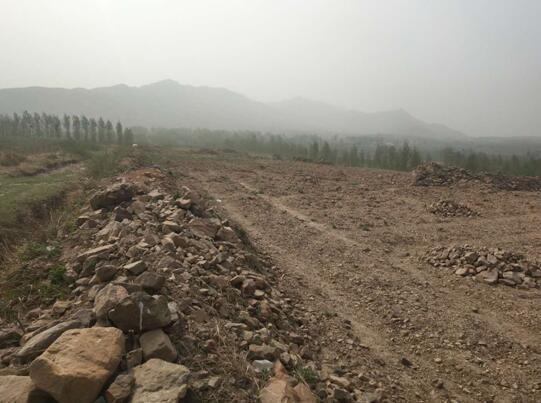 方城县独树镇几十亩耕地被占 村民反映多次镇政府不作为