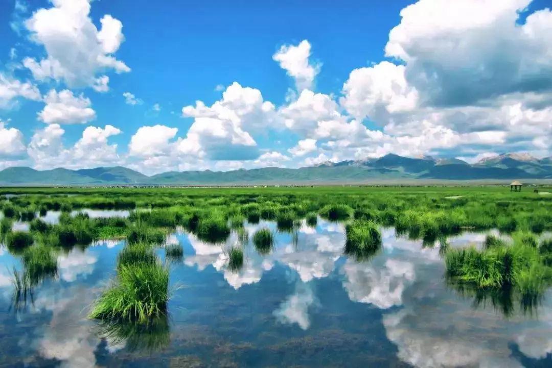 六月,四川旅游就去川西,若尔盖草原、俄木塘花海、稻城亚丁随便一个都是美景!