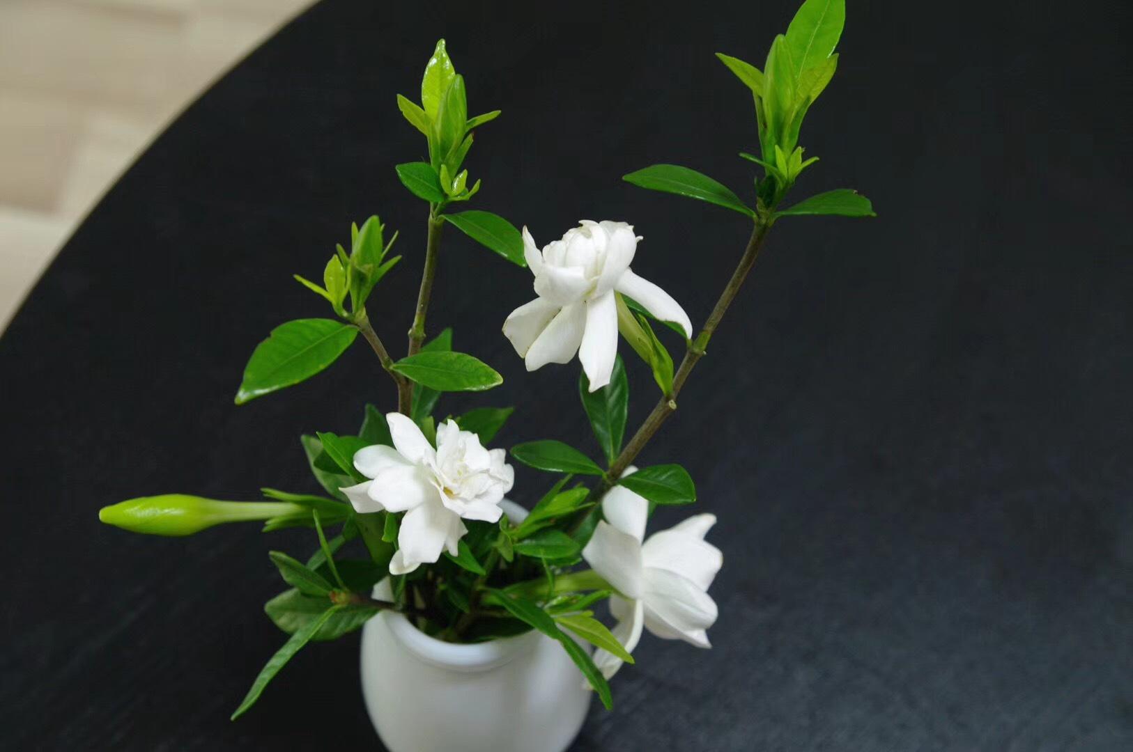 世间草木的签名:栀子花开香满庭