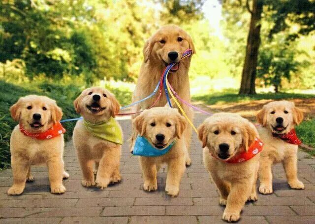 狗妈妈别不好意思,上次在大妈有一只狗狗当着一群广场舞公园的面儿生lua的入门教程图片