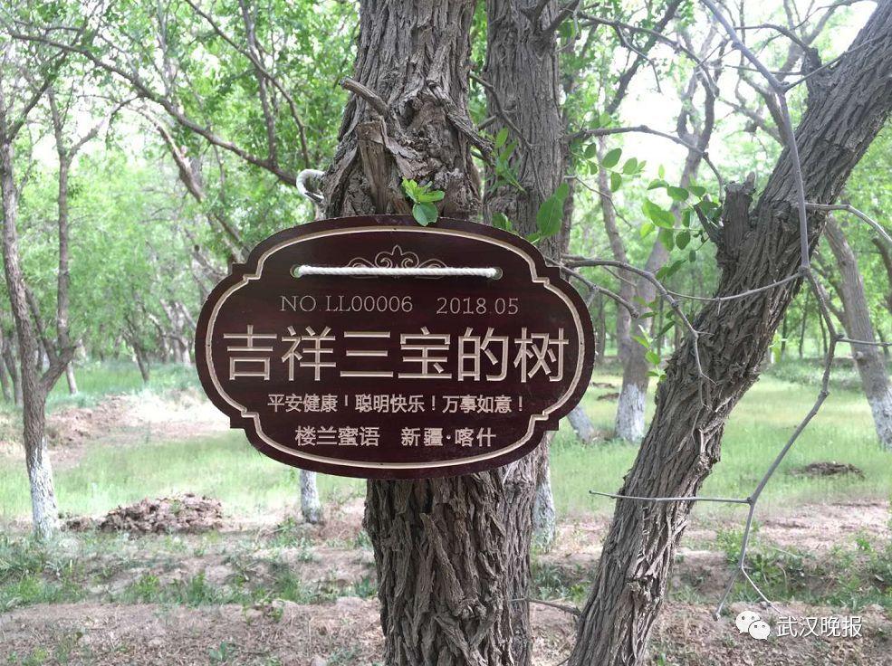 这个六一,离武汉4462公里的地方,有棵枣树和你的孩子同名