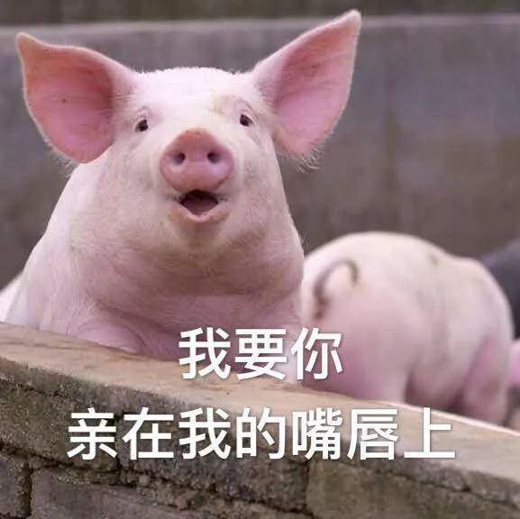 猪哥哥还给肥嘟嘟的小猪做了表情包,粉丝们大呼可爱.图片