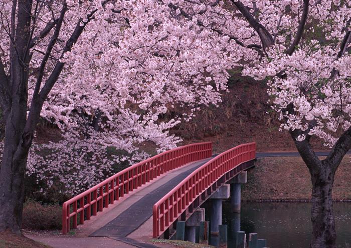 杭州日本留学:为时不晚!有梦就去追万一实现