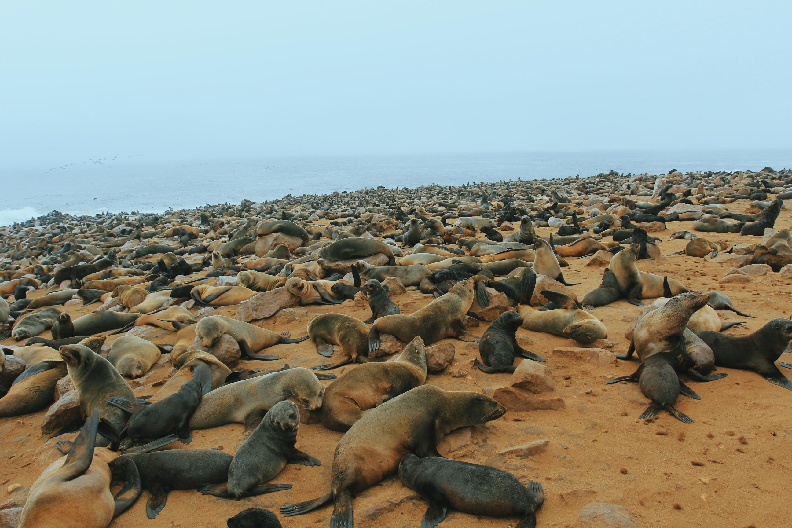 南非旁边的这个国家,拥有成群的火烈鸟、海豹和大象
