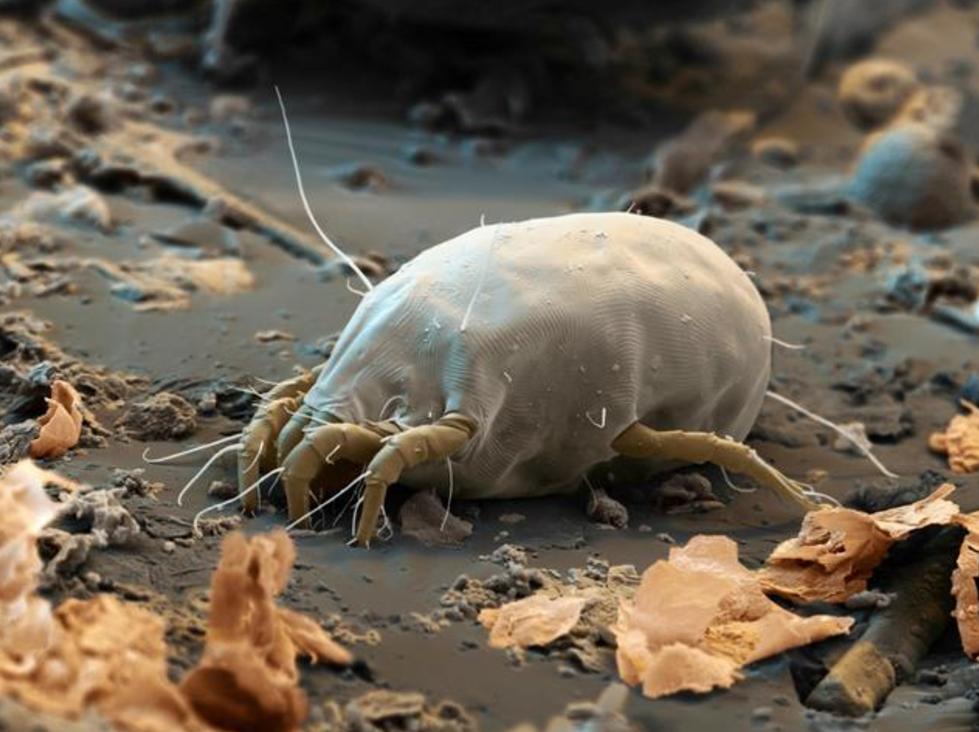 脸上螨虫过亿,除了去医院,家用3个天然方法也能清除干净
