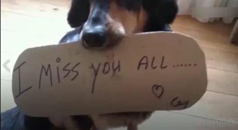 狗狗走失數十天,當再次見到的主人的那一刻,主人狗狗控制不住情緒哭成一團……