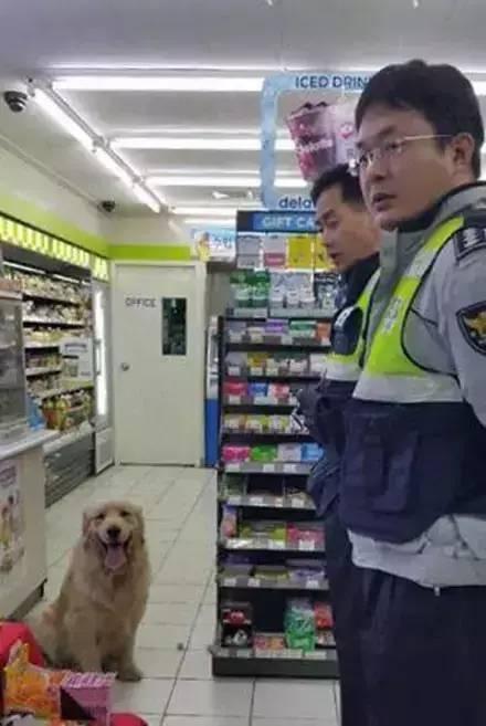 這隻金毛搶劫超市的原因讓警察都不好意思抓它……