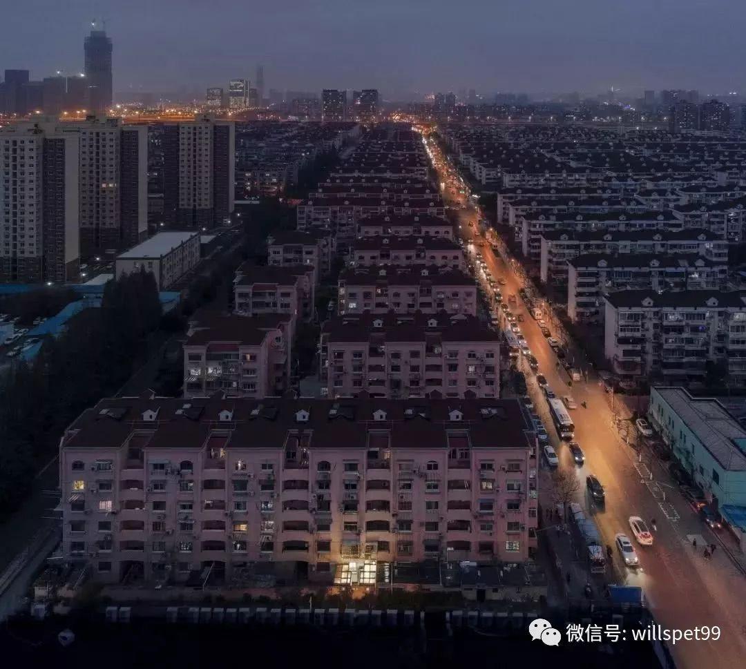 上海老太在50㎡的家養27只流浪貓和1只狗,崩潰的兒子做 了一件事……