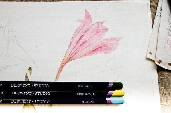 彩铅画基础入门绘画教程,彩色铅笔画手绘花卉过程和详细步骤