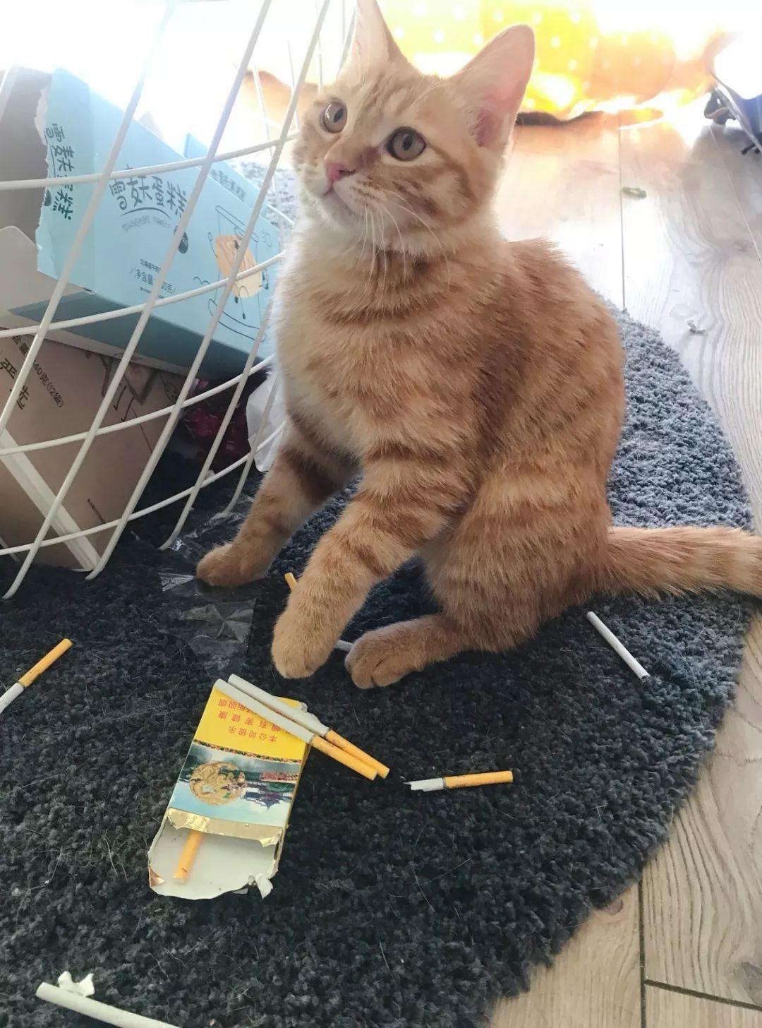 《我的男友是只猫》阿余啊_【原创小说|言情小说】_晋... _手机版