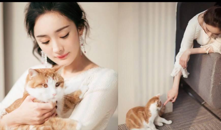 偷偷撸五月色_杨幂顶着空气刘海穿着休闲服撸猫少女感十足 大幂幂也是\