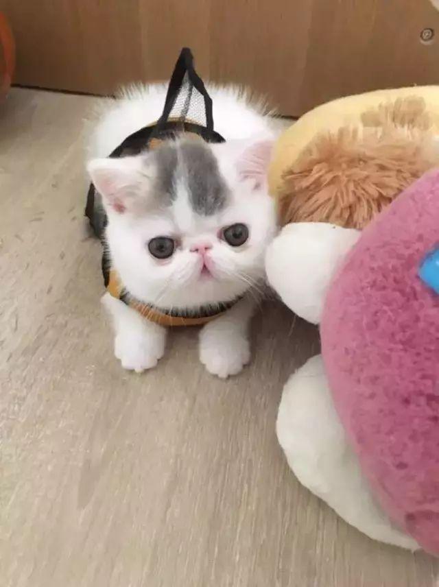 這隻畫風齁甜的喵寶,讓人忍不住想抱走!