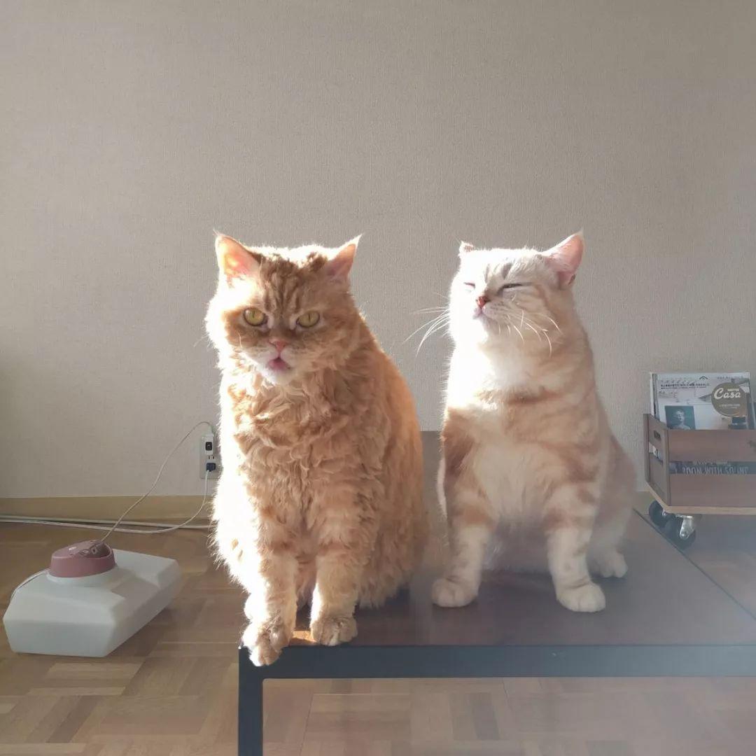 ins上一只常犯困的橘猫,每一个表情都能做表情包