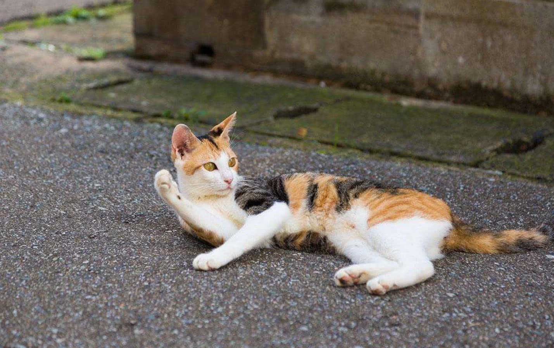 遇到流浪猫怎么办 当它在你面前这样做,意思就是快带我回家吧
