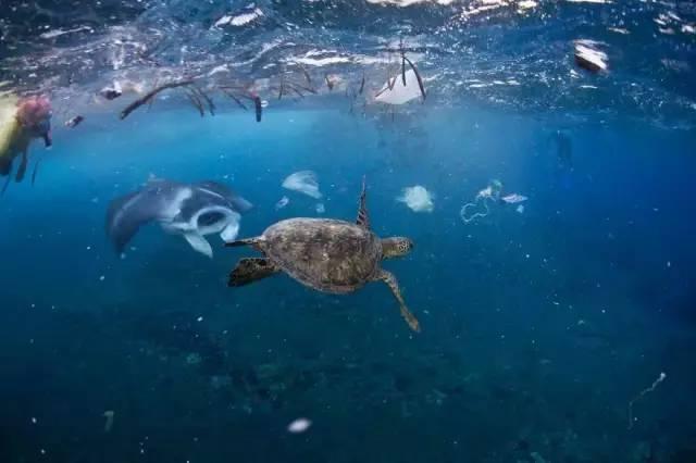海洋生物图片 100种海洋鱼类名称大全 动漫资讯  2020年1月3动物-海洋图片