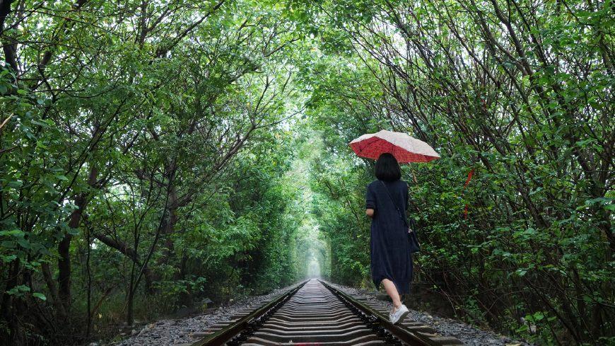 南京的爱情隧道,靠一条铁路两排树吸引无数情侣
