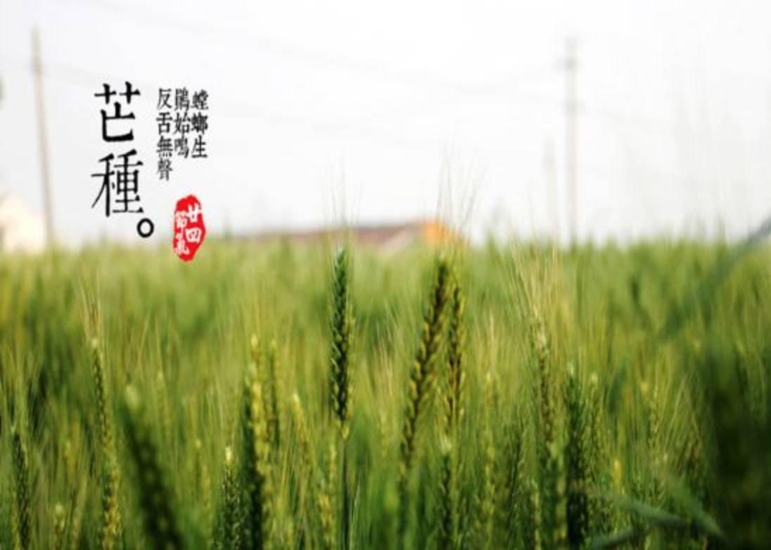 """芒种养生:专家支招""""五菜三茶"""",助您安度苦夏!"""