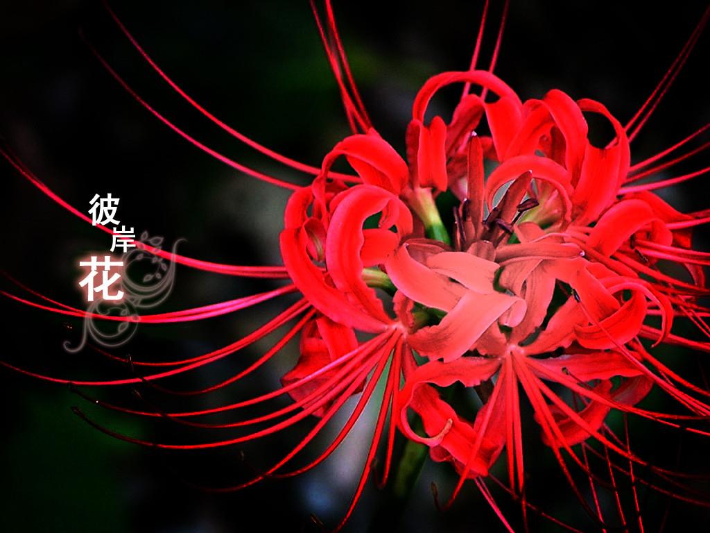 不同的鲜花代表什么含义图片