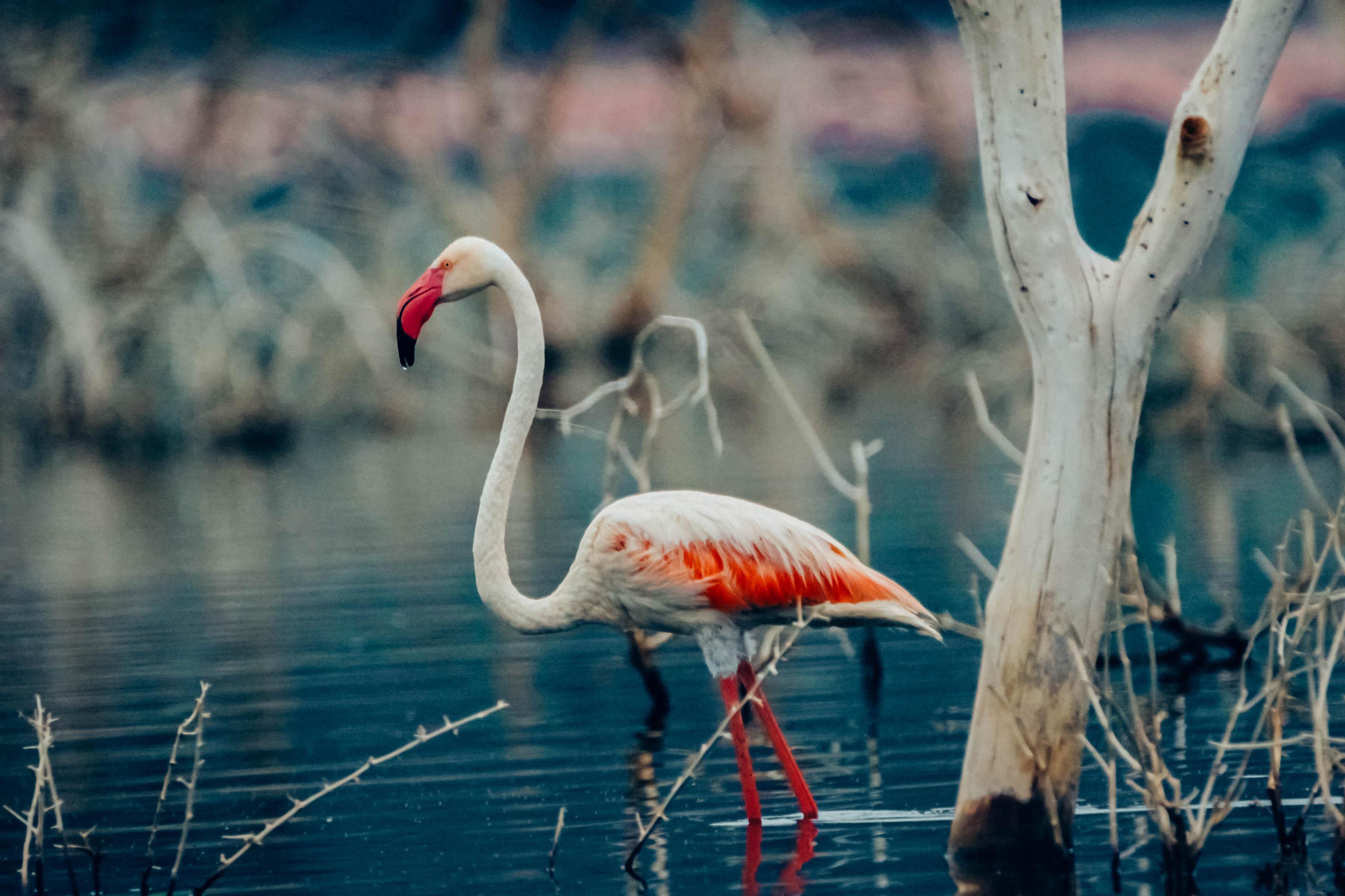 去肯尼亚拍摄野生动物,需要准备哪些摄影器材?