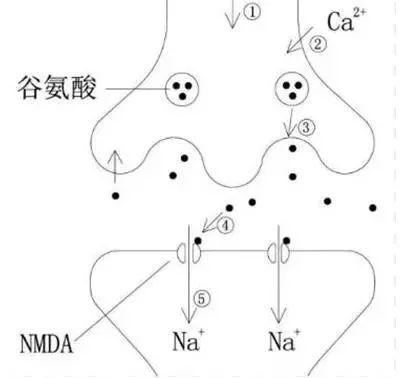 (4)als的发病机理是突触间隙谷氨酸过多,持续作用引成na 过度内流,神图片