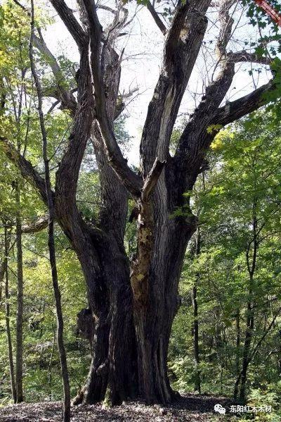85棵中国最美古树完整图片!最高树龄5000年!