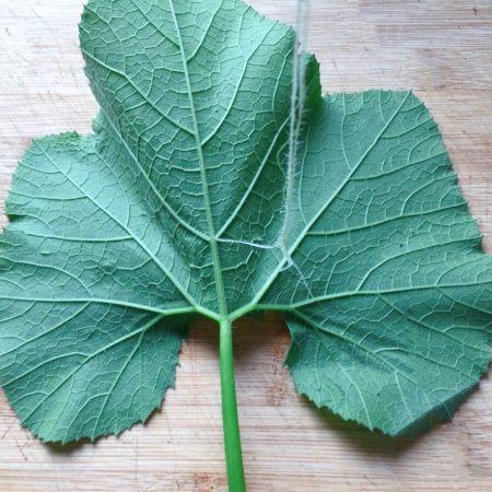 把叶茎从主藤撕下,叶柄也要如同主藤一样处理,剥去外层的筋络,南瓜叶图片