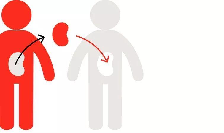 『新鲜趣事』冰岛通过一项法律,默认所有人死后自愿捐献器官