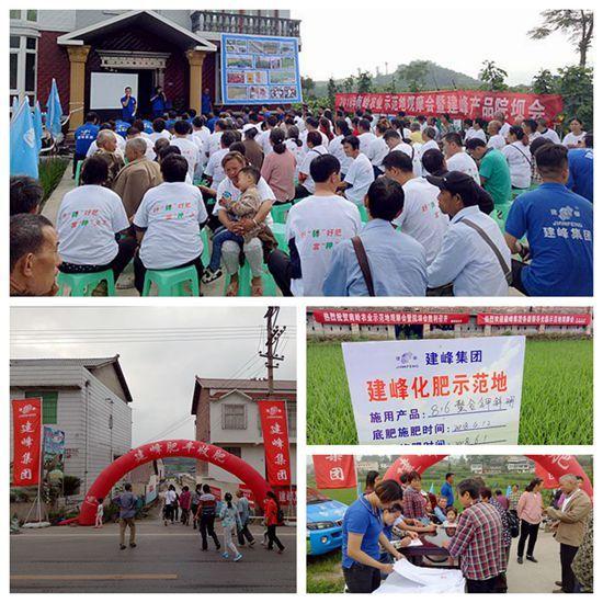 建峰集团化肥公司联合南岭农业举办水稻示范地观摩会
