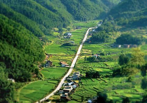 铜鼓县红豆杉_江西最美的国道省道公路,全部走过才知道真的美丽