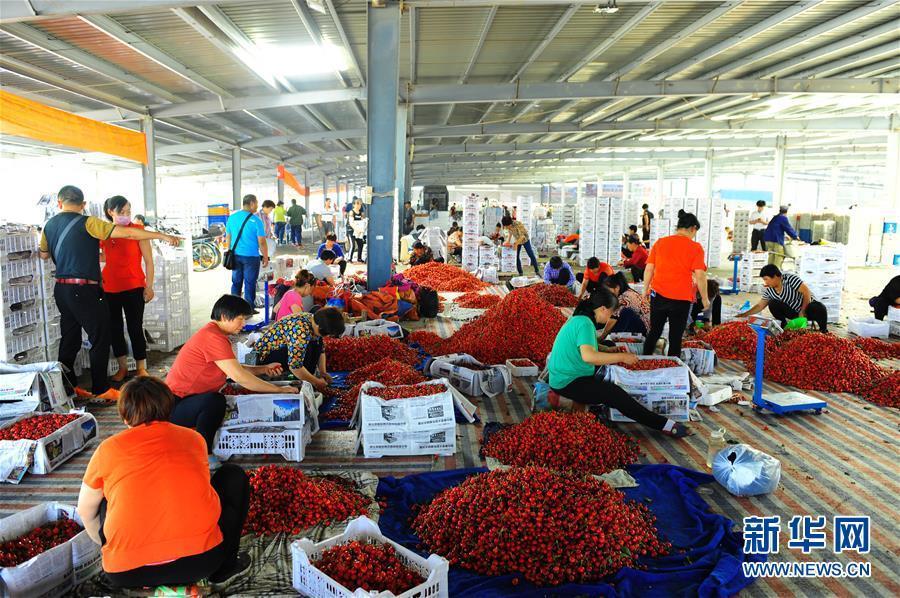 烟台樱桃产业助力农村骈兴 农丈夫却顶配顶出产超2万元