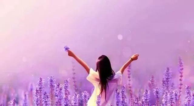 薰衣草的花语是等待爱情