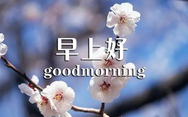 每天早上好问候语 早上好的句子图片