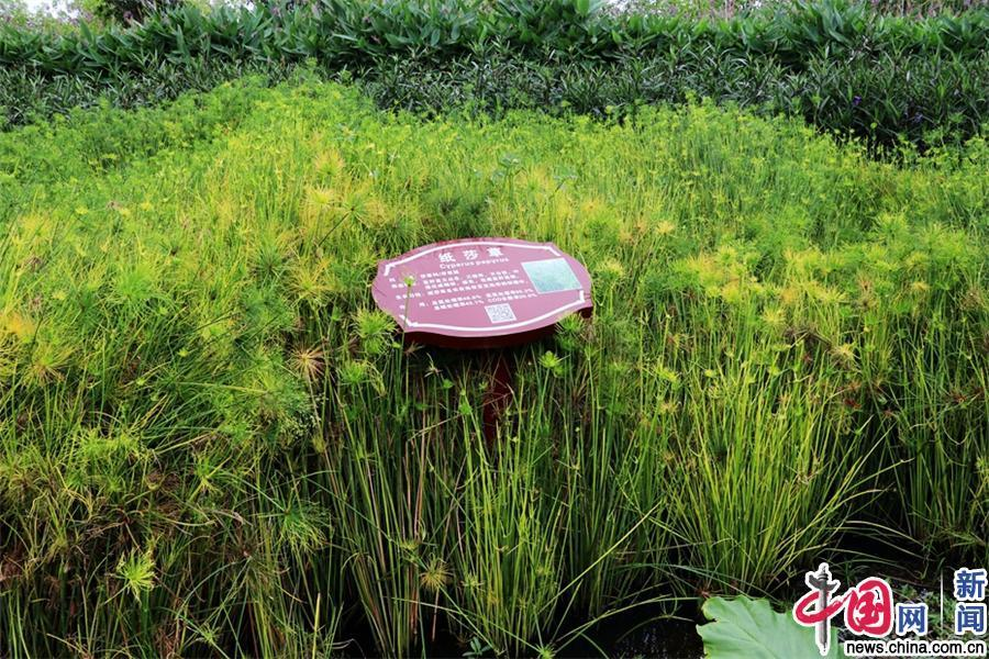 北京赛车刷水技巧:【新时代・幸福美丽新边疆】惊艳!凤翔湿地公园的华丽转身