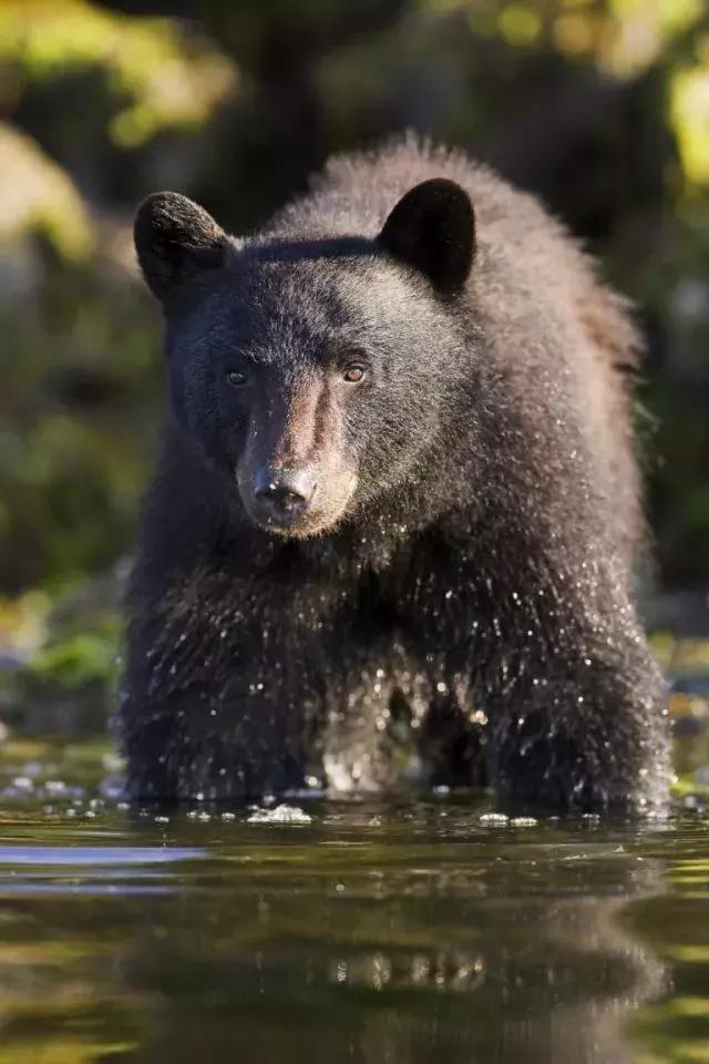 暑假倒计时32天!熊孩子的旅行安排好了吗?