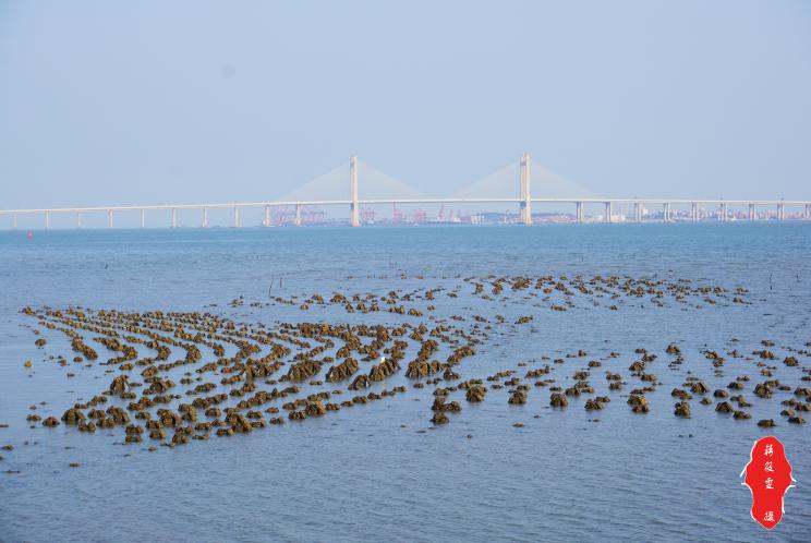 距离泉州市区最近可以捉蟹的海,了解一下