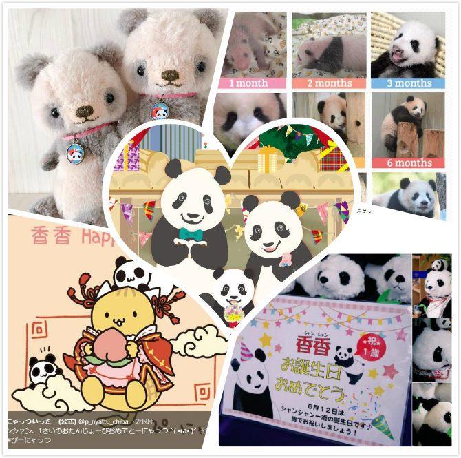 旅日大熊猫 香香 迎周岁 4000名日本粉丝排队庆生图片 107400 670x665