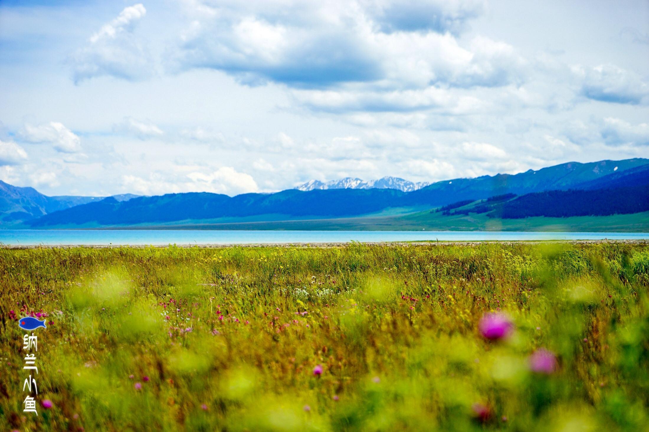 曾经满目疮痍   如今却被公认为中国最美的湖泊  新疆赛里木湖究竟发生了什么?