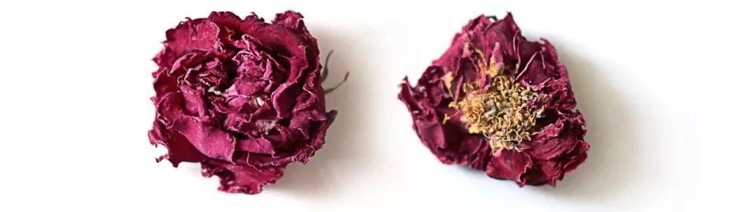 我从玫瑰花乡来,只为那朵朝露玫瑰
