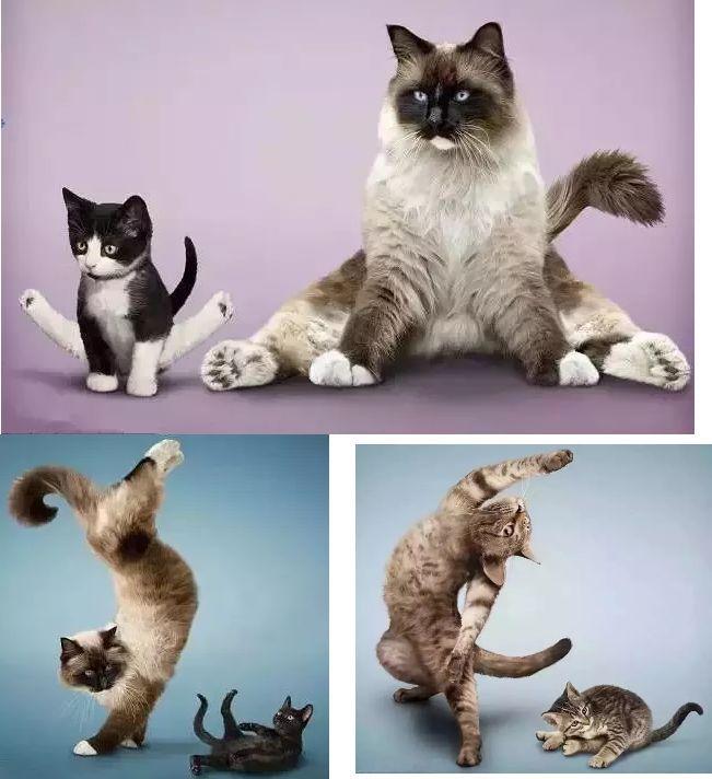 「 瑜伽之路 」累的时候,来一套性感的瑜伽猫式吧,倍儿爽.图片