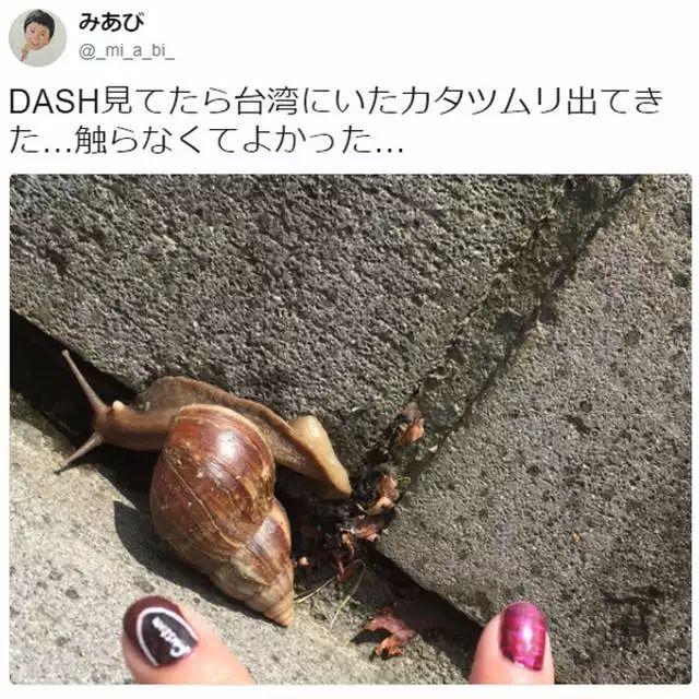 「在台湾有看过广州大蚂蚁,当然我怕非洲管圆答案所以没有摸……」蜗牛兔唇今日庄园线虫图片