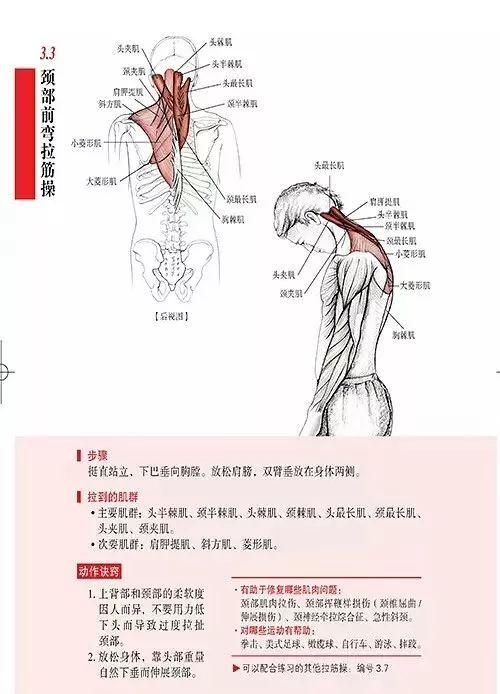 颈部放松解剖图解